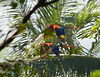 Costa Rica - Nature : Nature photos from Costa Rica rain forests